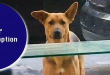 Photo of Dog For Adoption