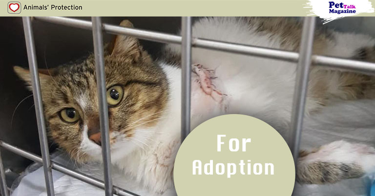 Cat Needs A Loving Home