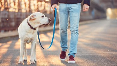 Photo of 9 Tips for Walking Dogs During Coronavirus Outbreak