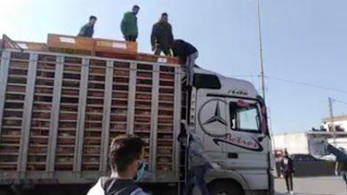 Photo of فيديو: هكذا يتم تهريب السوريين الى لبنان في أقفاص الدجاج