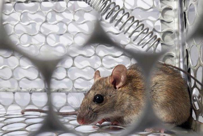 ما هو فيروس هانتا وهل يتحوّل الى وباء في الصين