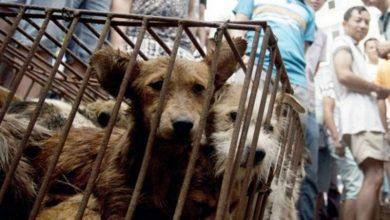 Photo of مدينة صينية تمنع أكل لحوم الكلاب والقطط بسبب كورونا!