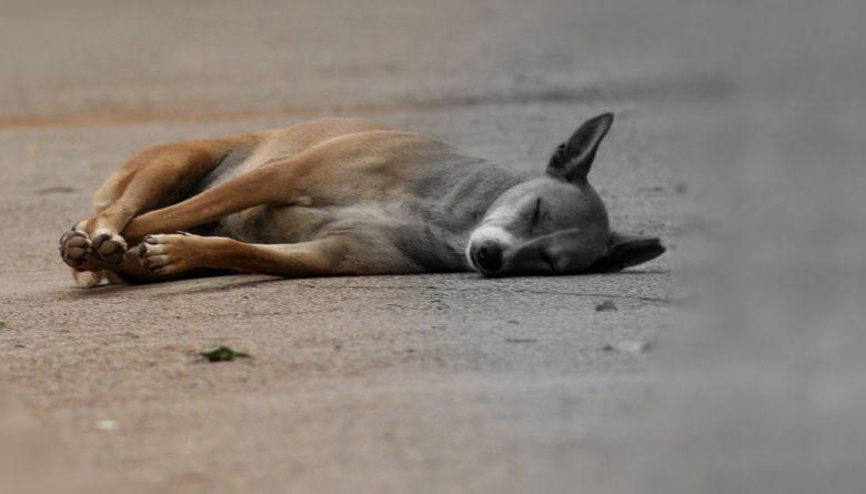 The Dogs' Killer of Bsalim Revealed