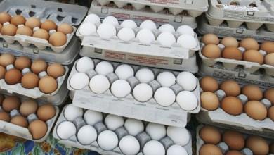 Photo of كرتونة البيض الى 45 الف والدجاج الى 65 الف!