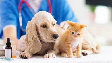 Photo of Veterinary Medicine Beyond the clinic
