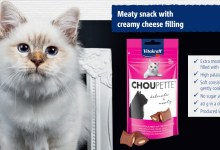 Photo of Vitakraft Lebanon Is Launching New Pet Treats